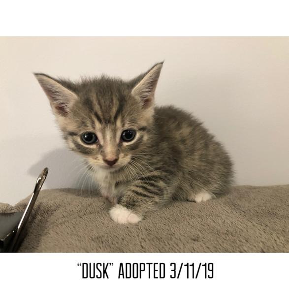 Dusk Adopted 3/11/19