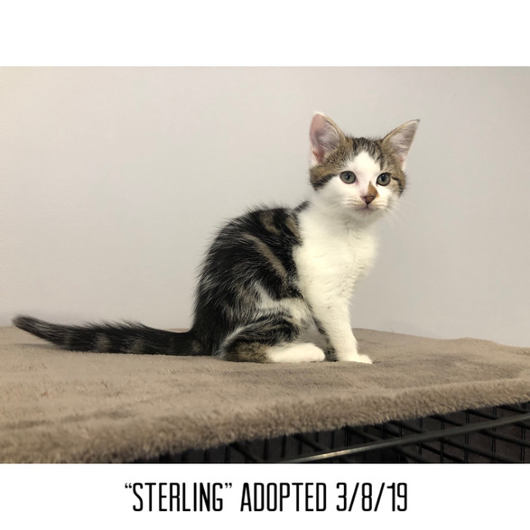 Sterling Adopted 3/8/19