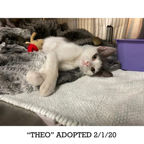 Theo Adopted 2/1/20