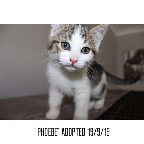 Phoebe Adopted 19/9/19