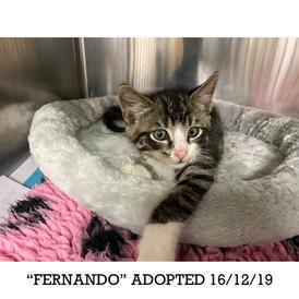 Fernando Adopted 16/12/19