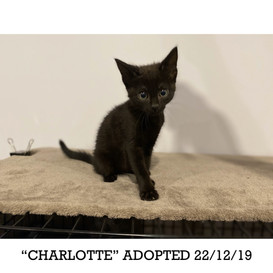 Charlotte Adopted 22/12/19