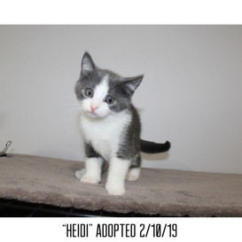 Heidi Adopted 2/10/19