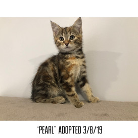 Pearl Adopted 3/8/19