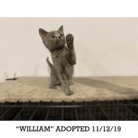 William Adopted 11/12/19