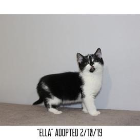 Ella Adopted 2/10/19