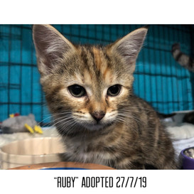 Ruby Adopted 27/7/19