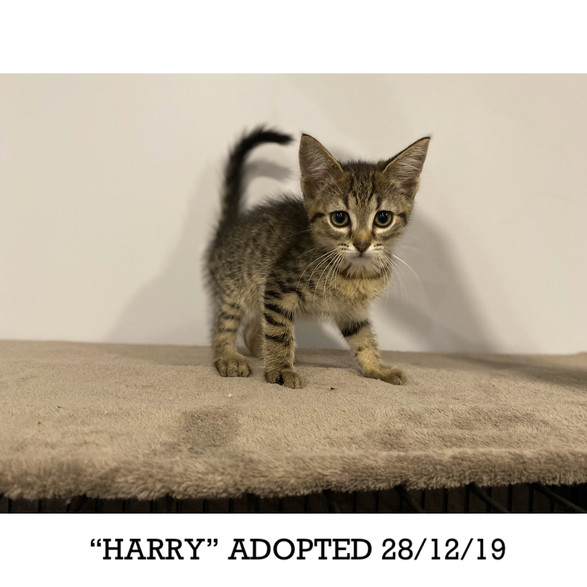 Harry Adopted 28/12/19