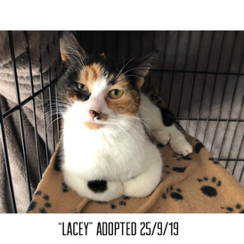 Lacey Adopted 25/9/19