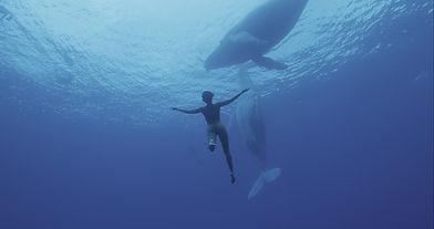 Wale Kopie.jpg