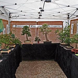 Herbstliches Landfest 2008 in der Moorbaumschule Vennegeerts