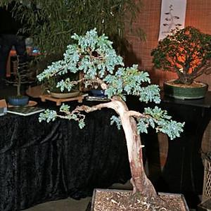 Gartenträume 2011
