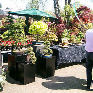 Bonsai im Gartencentrum Klukkert