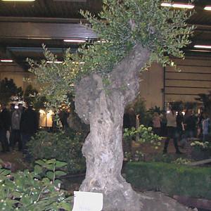 Gartenträume 2006