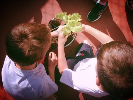 3 qualidades que uma horta pode ensinar para ser um bom líder