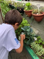Cuidados com a horta agroecológica