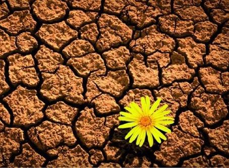 Mas afinal de contas, o que é sustentabilidade?