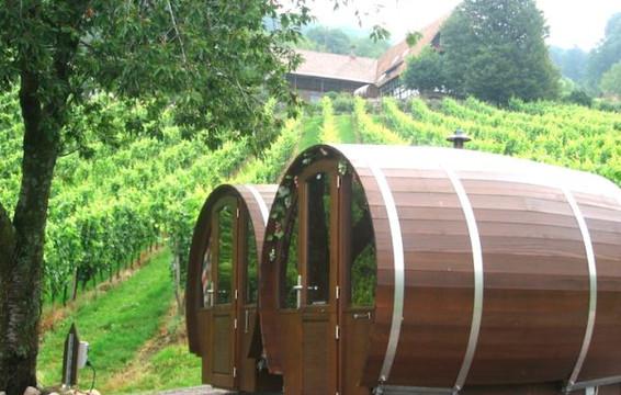 At vineyard
