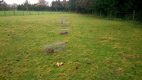 Catch alive rabbit traps