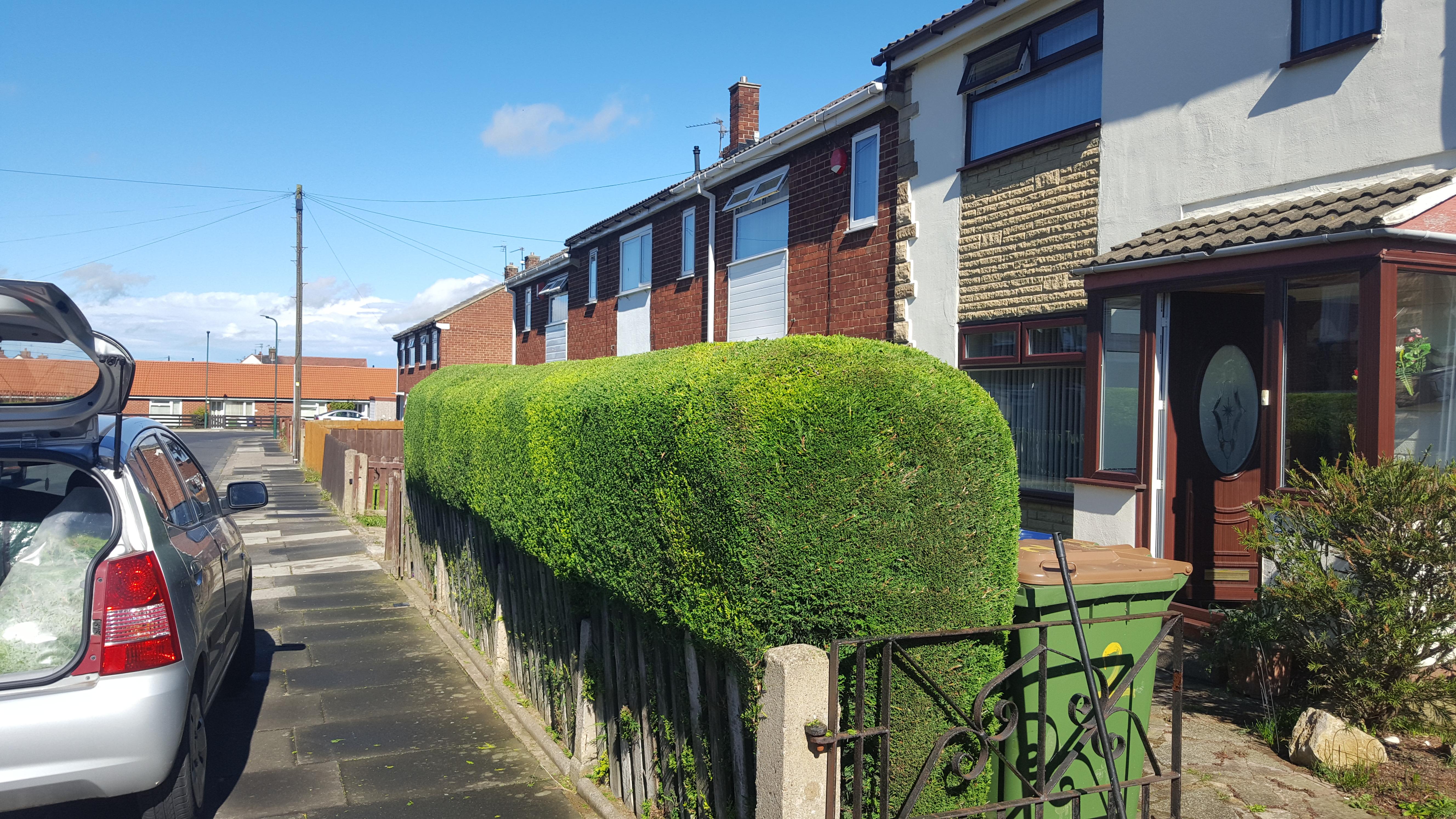 Leylandii Hedge Trimming
