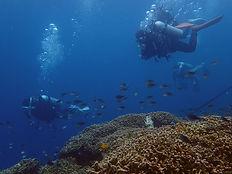 安全第一で南国の海を楽しむ