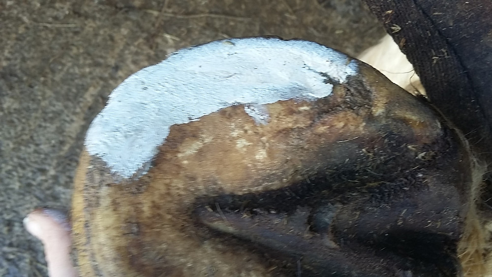 Artimud fills in the space in sole