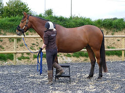 L R Equine - Equine Behaviour Trainer Cornwall
