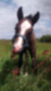 Equine Behaviour Specialist Cornwall
