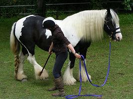 L R Equine - Equine Behaviour Specialist Cornwall