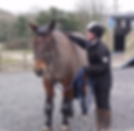 L.R Equine - Equine Behaviour Trainer, Cornwall