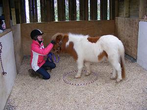 L R Equine - Equine Behaviour Trainer, Cornwall
