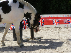 Helping Ponies & Owners to be BRAVE!