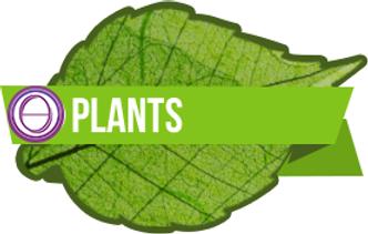 thetahealing plants with lorea elia life mastery journeys