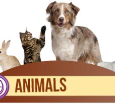 thetahealing animals with lorea elia life mastery journeys.png