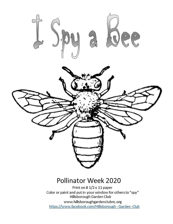 Coloring sheet I Spy a Bee realistic PDF
