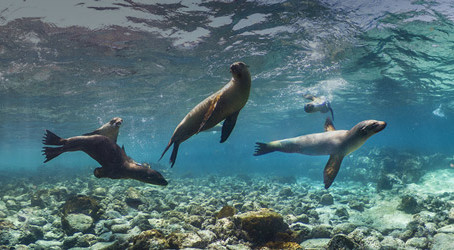 Early Booking Offer: 2022 Galápagos Islands Expedition Cruise