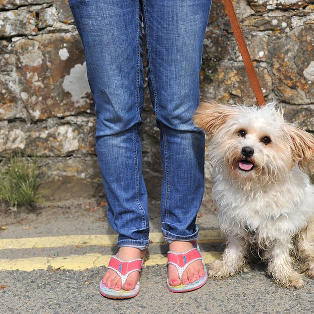 Dog Walk Series102