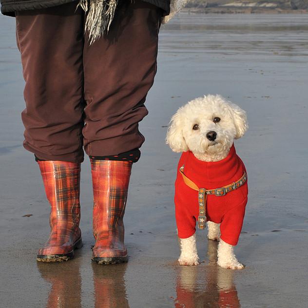 Dog Walk Series 08