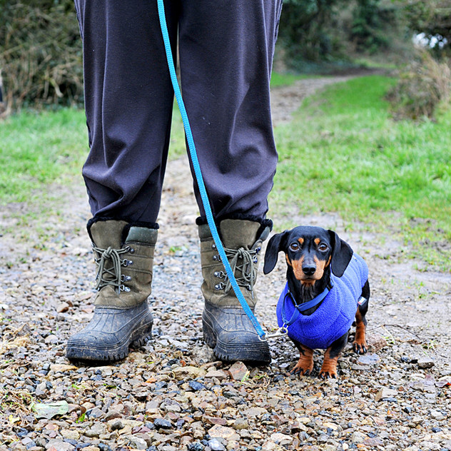 Dog Walk Series 24