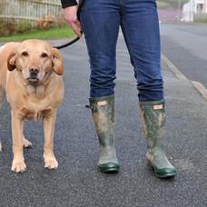Dog Walk Series 33