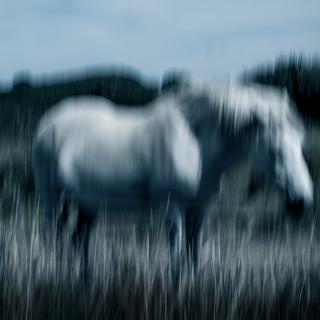ICM Horse