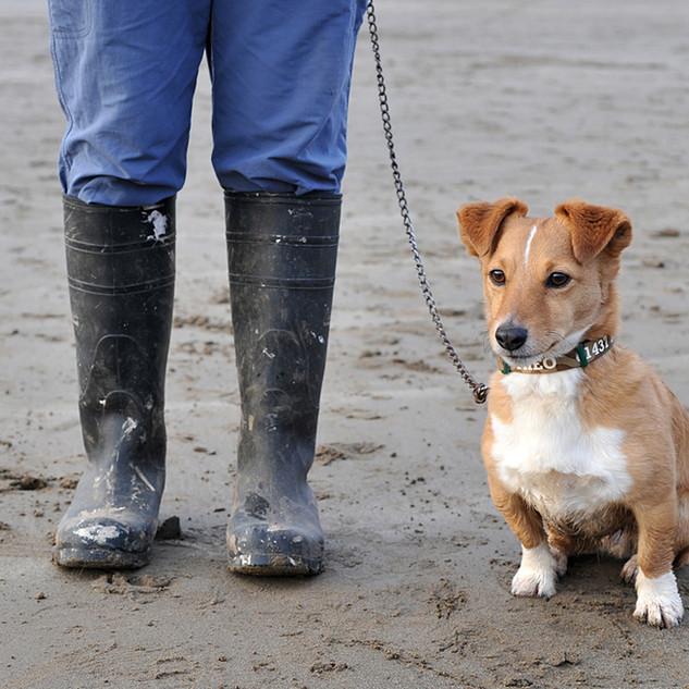 Dog Walk Series12