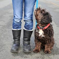 Dog Walk Series 28