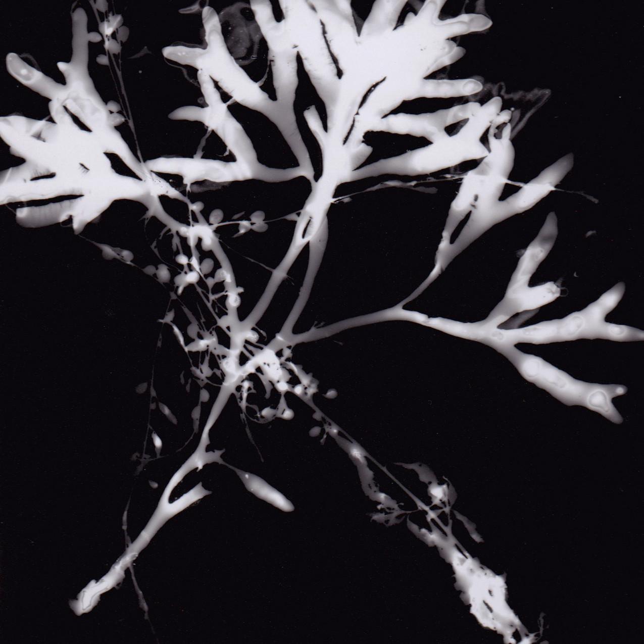 Seaweed Photogam 4