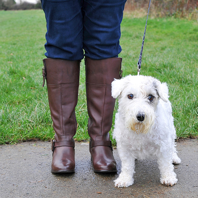 Dog Walk Series14