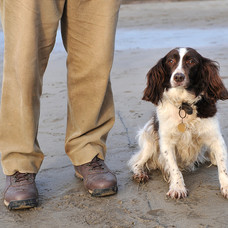 Dog Walk Series11