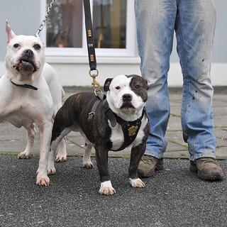 Dog Walk Series 29