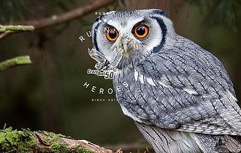 Crazy-Owl-nochnoj-trejl-ran2-1200x760.jp