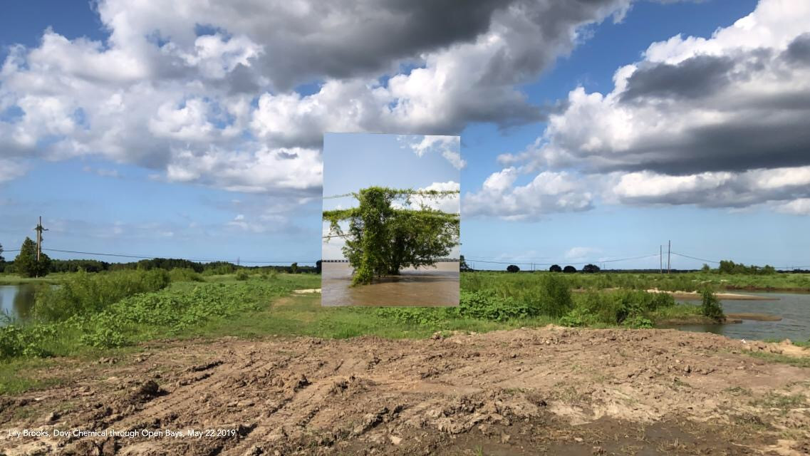 Lily Brooks, Kudzu and Tree near Site of Kugler Cemetery, May 22, 2019
