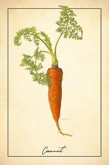 Carrot Botanical Print, Farmhouse Kitchen, Rustic Kitchen Digital Download